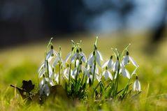 .... der Frühling hält Einzug ....