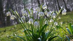 der Frühling hält Einzug,
