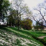 Der Frühling hat Einkehr gehalten im Rosensteinpark
