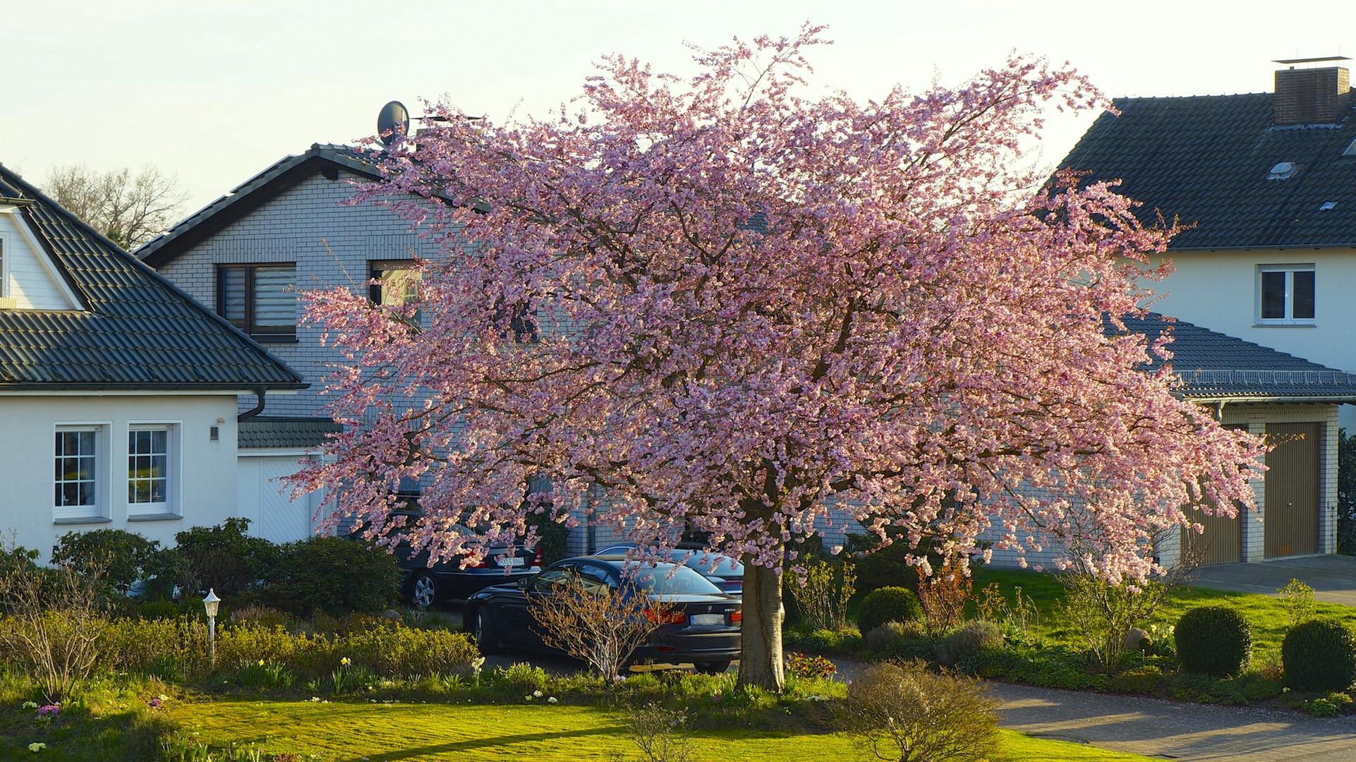 Der Frühling ist angekommen