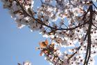 Der Frühling ist auf dem Weg