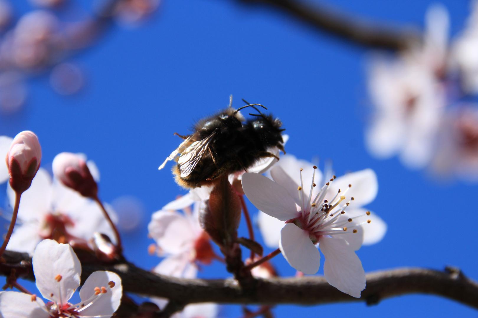 Der Frühling ist da -2