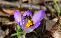 Der Frühling ist da
