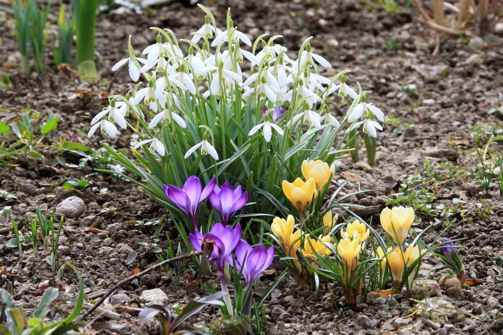 Der Frühling ist da !!!