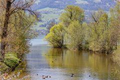 Der Frühling ist da - Mündungsdelta der Jona