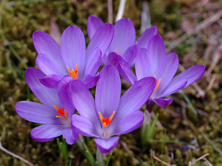 Der Frühling ist gekommen