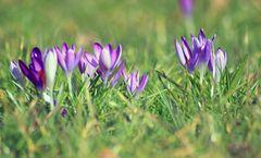 Der Frühling ist im Anmarsch....
