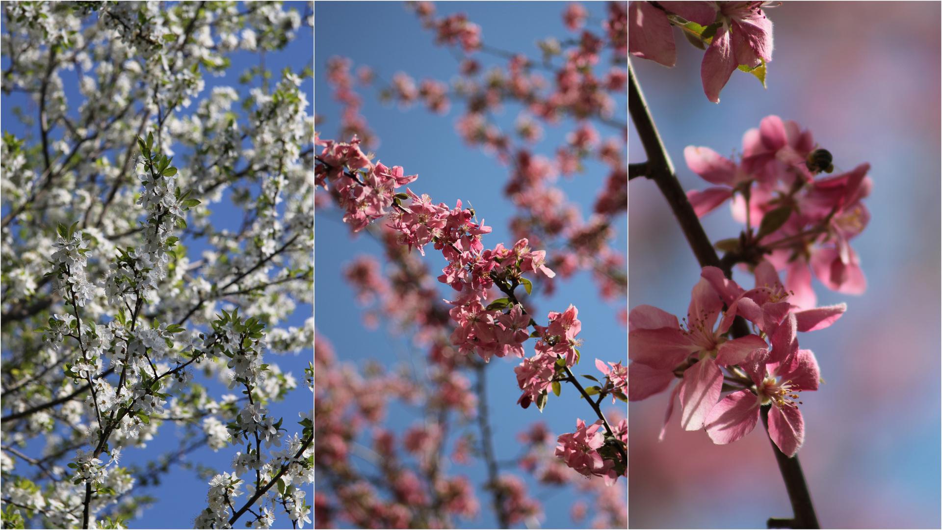 Der Frühling ist im vollen Gange