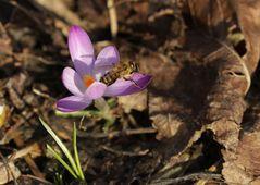 Der Frühling ist schon ganz nah.