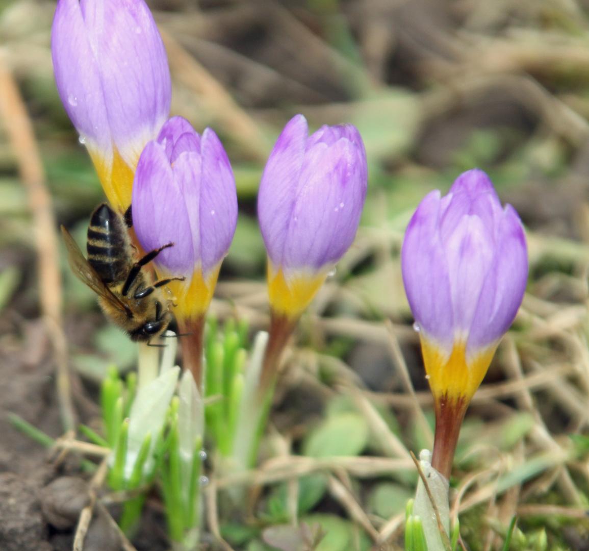 Der Frühling kämpft