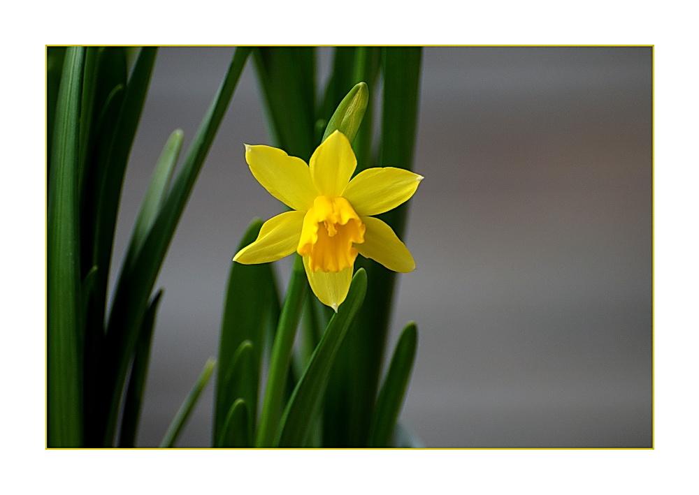 der Frühling kann kommen ......