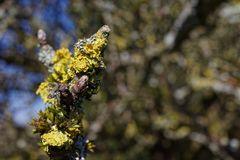 Der Frühling kommt  (2)