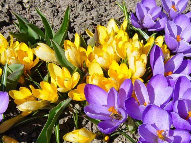 Der Frühling kommt . . .