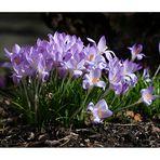 der Frühling kommt............