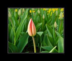 der Frühling kommt