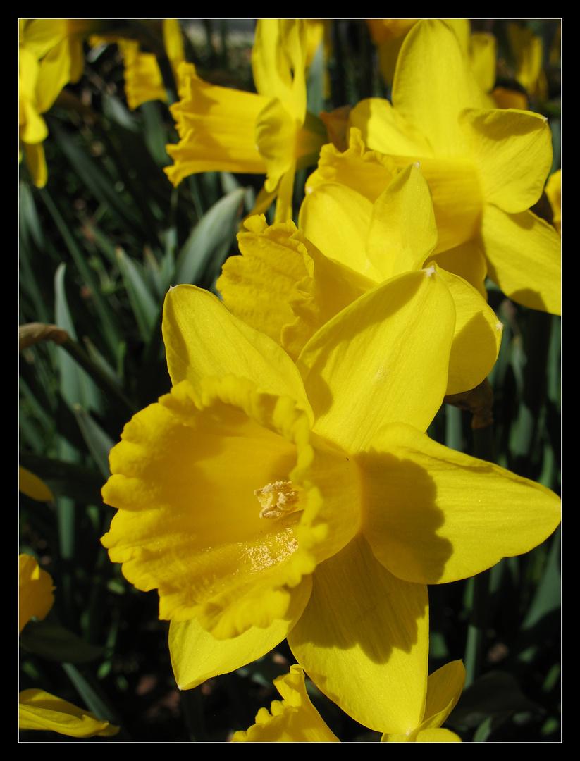 der Frühling kommt bestimmt !