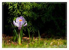 Der Frühling kommt!!!