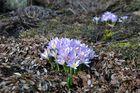 Der Frühling kommt.