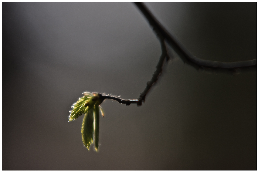 Der Frühling kommt - Die ersten Bäume schlagen aus ;-)