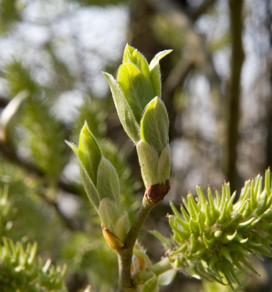 Der Frühling kommt jetzt gewaltig nach dem langen Winter