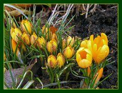Der Frühling kommt mit großen Schritten...