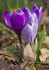 Der Frühling kommt mit Macht