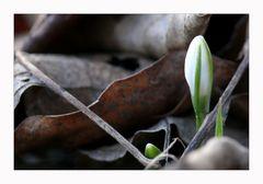 ...der Frühling kommt wieder