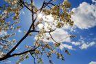 Der Frühling kommt zurück!