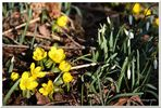 Der Frühling lässt Grüßen