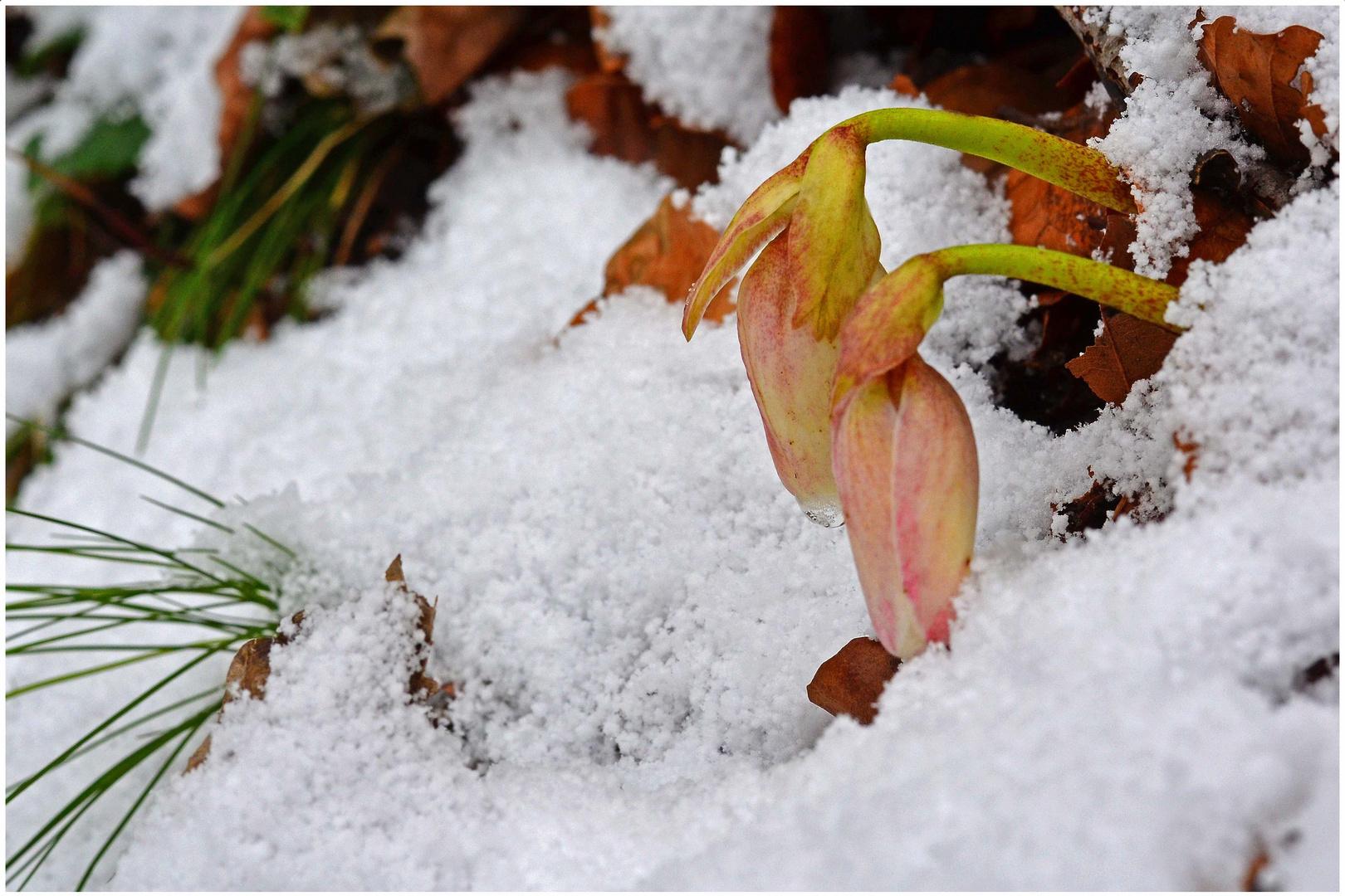 Der Frühling läßt grüßen!