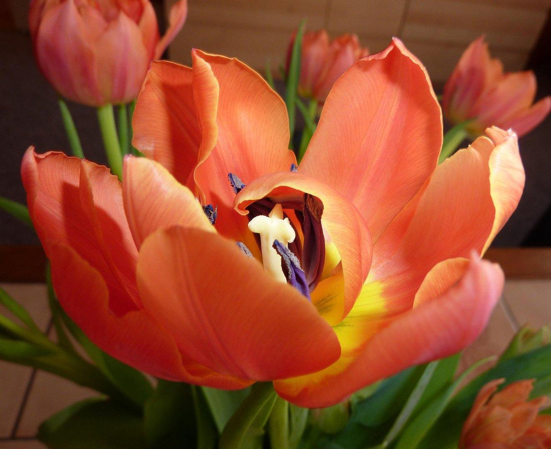 Der Frühling lässt grüßen ...