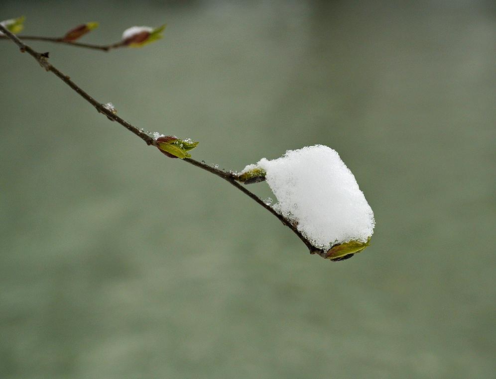 Der Frühling lässt noch auf sich warten!