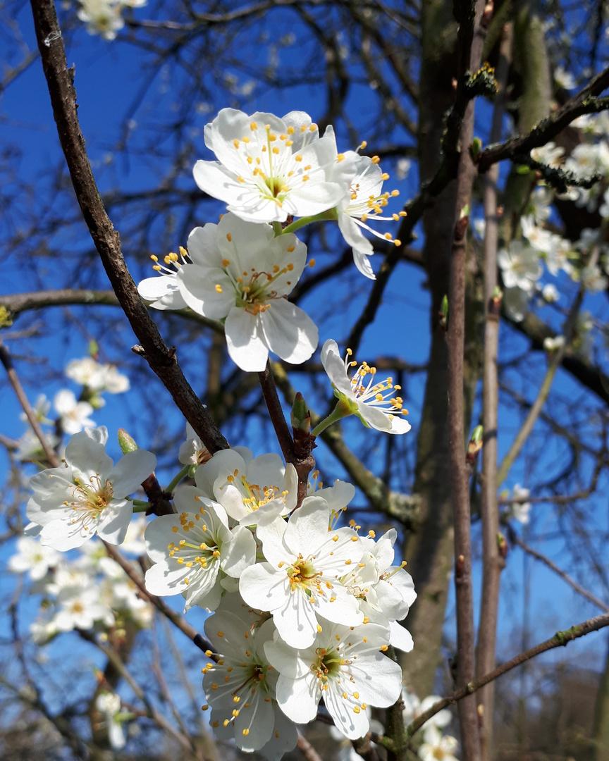 Der Frühling lässt sein blaues Band wieder flattern durch die Lüfte...