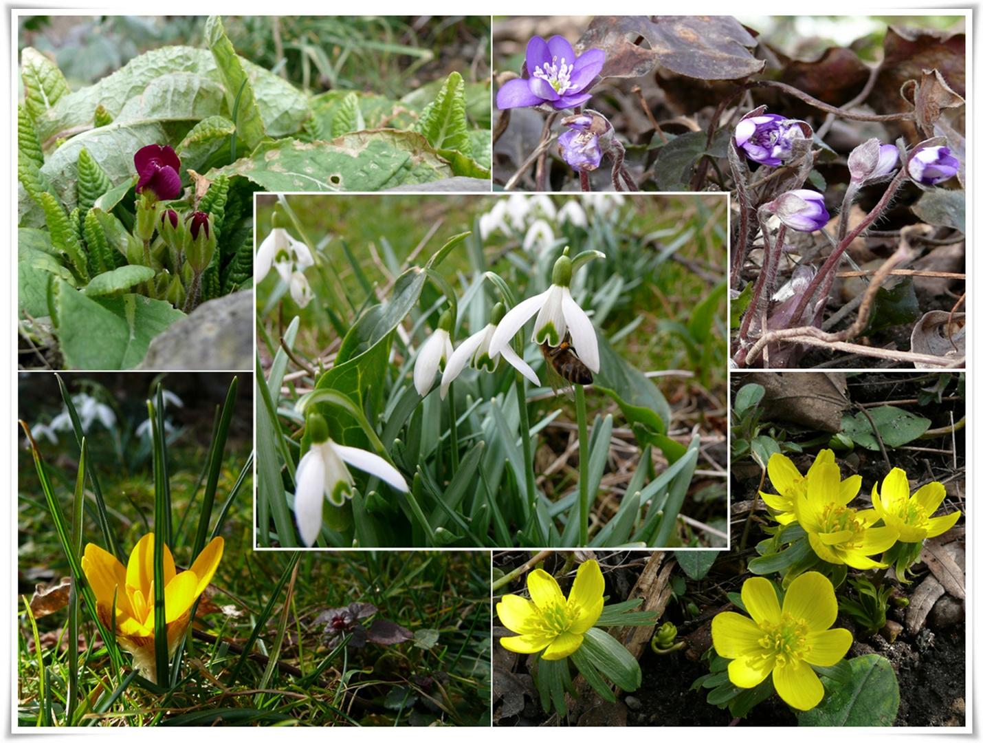 Der Frühling macht Fortschritte...