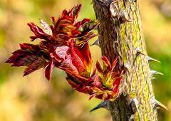 Der Frühling malt die Natur neu