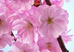Der Frühling mit seinen zarten Farben