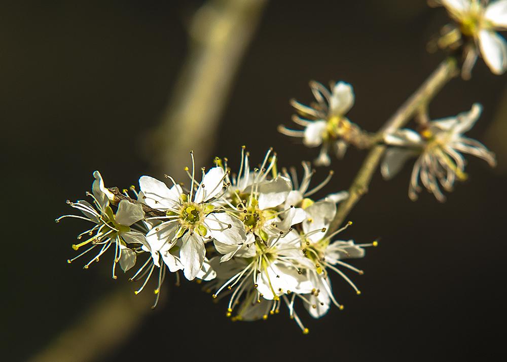 Der Frühling naht