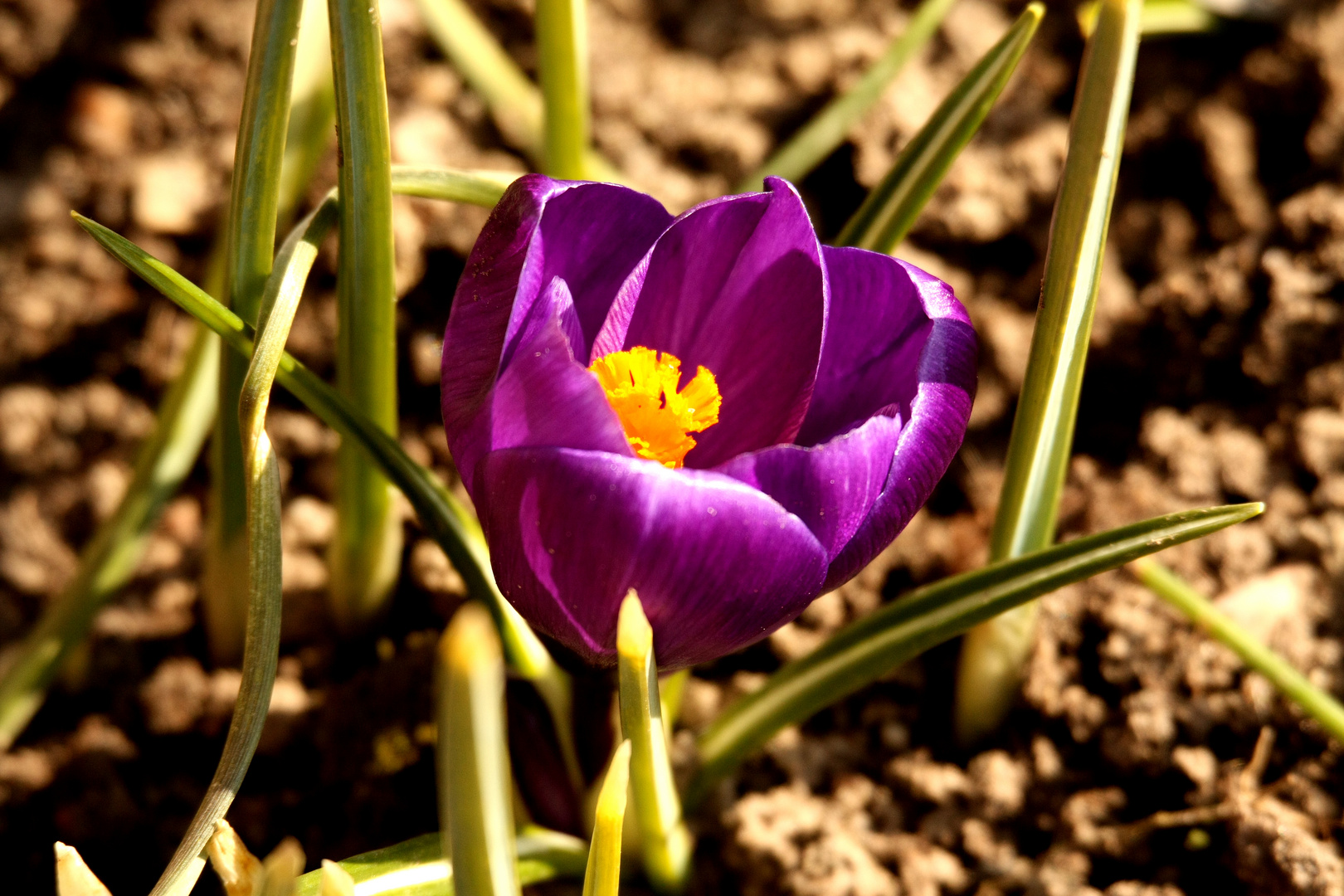...der Frühling naht