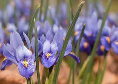 Der Frühling naht....