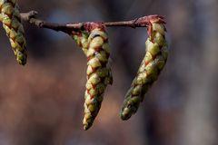 Der Frühling naht (Macro)..