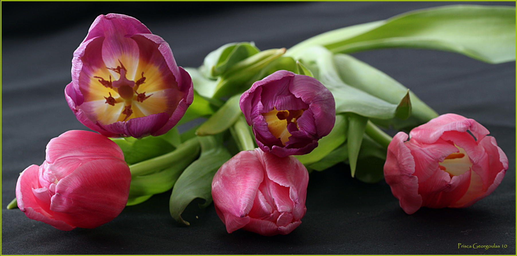 Der Frühling naht - Tulpenharmonie