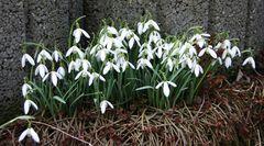 der Frühling wird eingeläutet