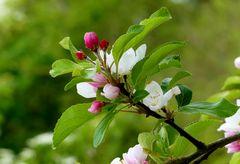 Der Frühling zeigt sich von seiner schönen Seite