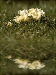 Der Frühlings-Spiegel