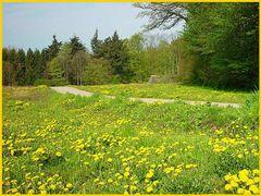 Der Frühlingsblick