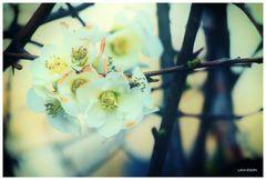 Der Frühlingstraum...