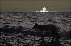 Der Fuchs ...