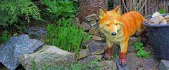 """Der Fuchs als """"Wächter des Frauenschuhs"""", der prächtig wächst..."""