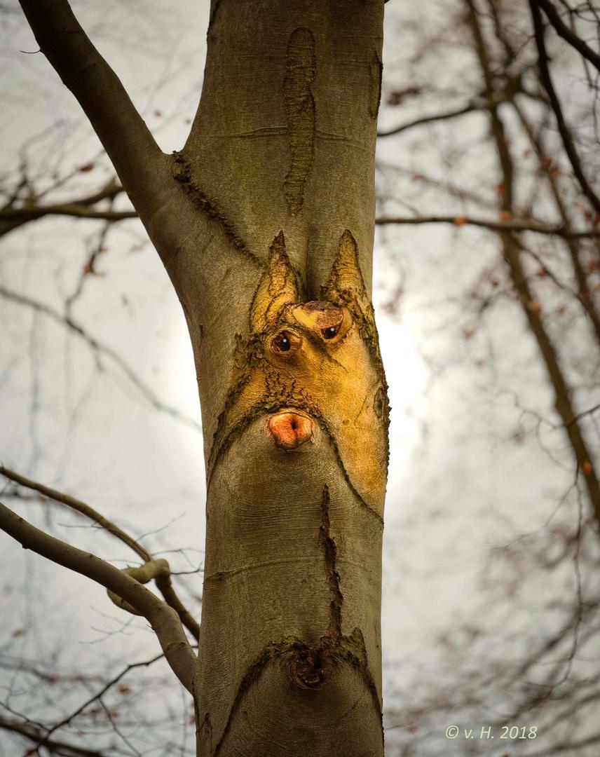 Der Fuchs im Baum