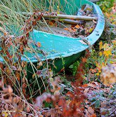 Der Fund im Herbst